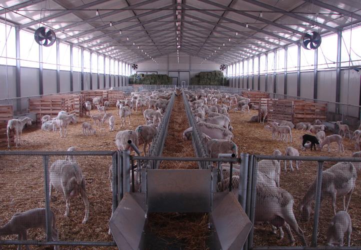 Farmsystems - Ποιμνιοστάσια