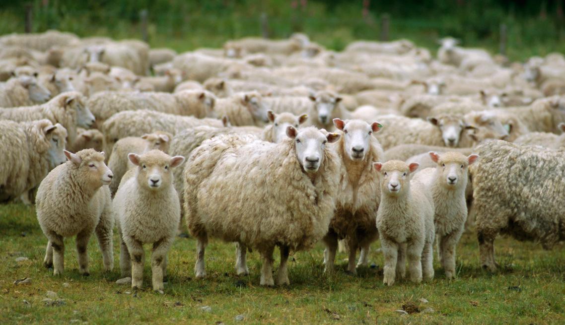 Farmsystems – Ζωοτεχνικές Μονάδες